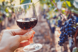 the best wineries in bulgaria